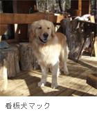 アトリエの看板犬・マック